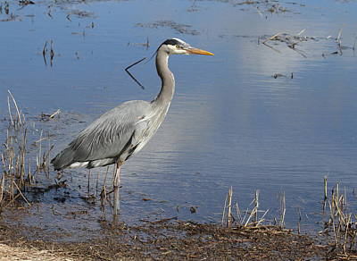 Photograph - Content Heron by Angie Vogel