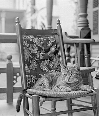 Photograph - Contented Cat by William Haggart