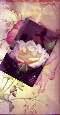 Continuation From Print To Photo Of White Rose Art Print by Anne-Elizabeth Whiteway
