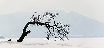 Contorted Tree At A Frozen Lake, Lake Print by Panoramic Images