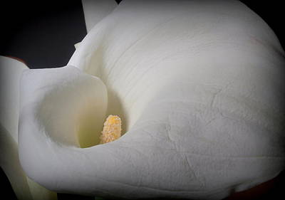 Photograph - Contours Of A Lily by Joe Kozlowski