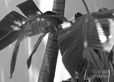 Redlin Photograph - Contrasting Palms by Margaret Juul Ammann