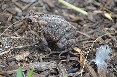 Photograph - Contrasting Rough Toad And Delicate Feather by Jeff at JSJ Photography