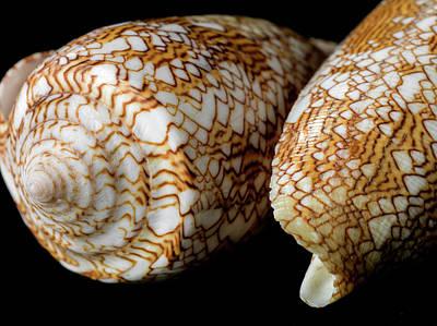 Conus Textile Art Print