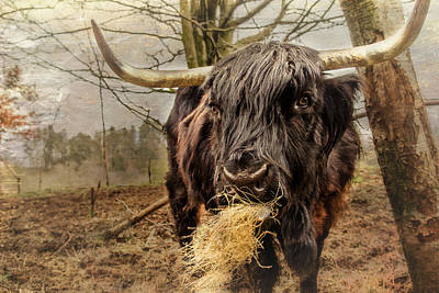 Photograph - Coo De Grass by Fiona Messenger