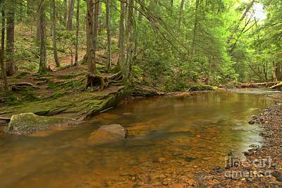 Photograph - Cook Forest Green Canopy by Adam Jewell