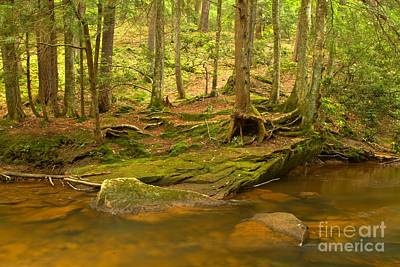 Photograph - Cook Forest Rocks And Roots by Adam Jewell