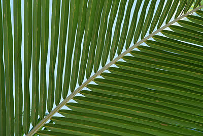 Cook Islands Palmerston Island Detail Art Print