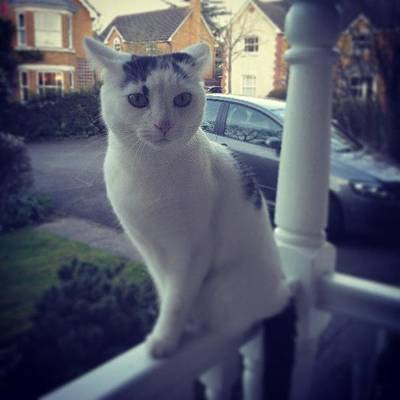 Plus Photograph - Cookie Being Bare Stunnahz #cat #porch by Maxx Parker
