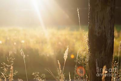 Nikki Vig Royalty-Free and Rights-Managed Images - Cool and Crisp - Thursday Morning Fall Sunrise by Nikki Vig