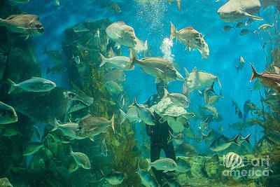 Photograph - Cool Aquarium by Ray Warren