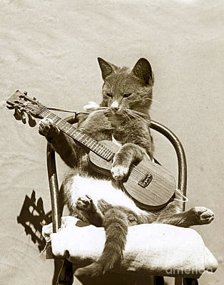 Print featuring the photograph Cool Cat Playing A Guitar Circa 1900 Historical Photo By Photo  Henry King Nourse by California Views Mr Pat Hathaway Archives
