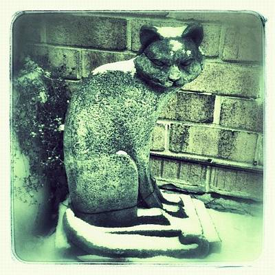 Cats Photograph - Cool Cat!  #snow #january #winter by Teresa Mucha