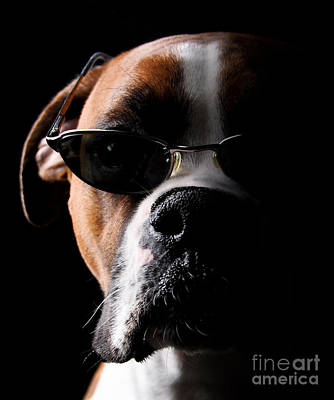 Cool Dog Art Print by Jt PhotoDesign