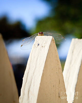 Photograph - Cool Dude Dragonfly by Peta Thames