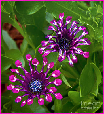Cool Flowers Art Print by Timothy J Berndt