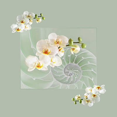 White Orchids Photograph - Cool Green Fusion by Gill Billington