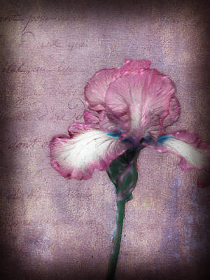 Photograph - Cool Iris by Kathy Williams-Walkup