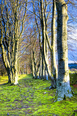 Photograph - Cool Light Of A Scottish Winter Morning by Mark E Tisdale