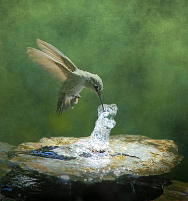 Tiny Bird Photograph - Cool Refreshment by Angie Vogel