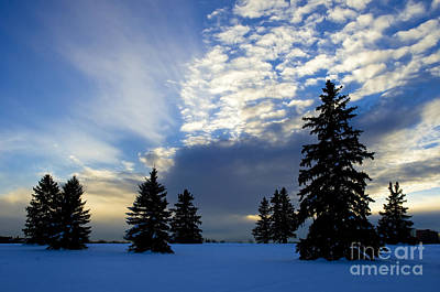Photograph - Cool Sky by Terry Elniski