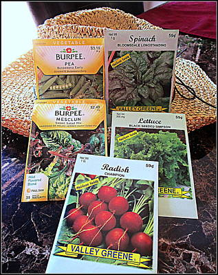 Photograph - Cool Weather Seeds by Kay Novy