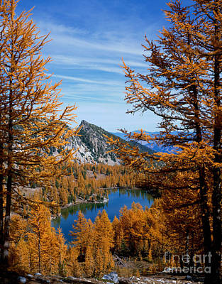 Cooney Lake And Martin Peak Art Print by Tracy Knauer