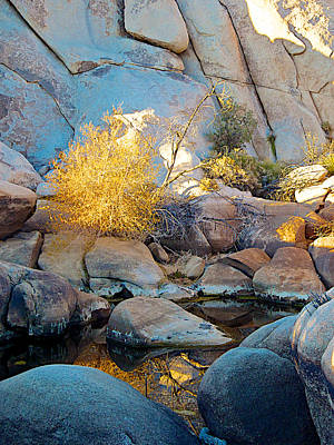 Barker Digital Art - Cooper's Goldenbush Barker Dam Pool Reflection In Joshua Tree Np-ca by Ruth Hager