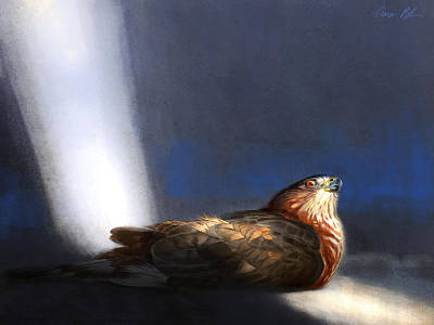 Digital Art - Coopers Hawk by Aaron Blaise