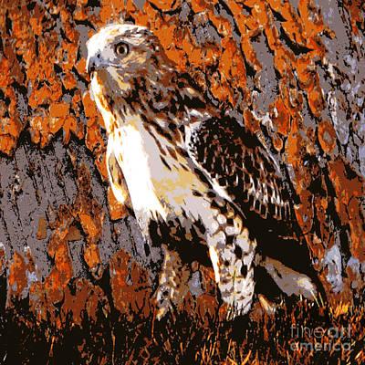 Photograph - Cooper's Hawk by Judy Palkimas