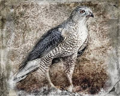 Artography Photograph - Coopers Hawk by Melissa Bittinger