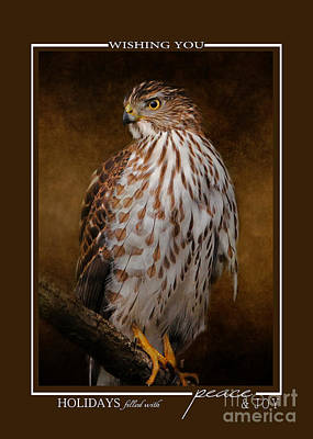 Photograph - Cooper's Hawk Wildlife Christmas Cards by Jai Johnson