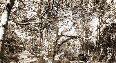 Canyons Drawing - Coopers Sic Canyon, Jackson, William Henry, 1843-1942 by Litz Collection