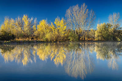 Bo Insogna Photograph - Coot Lake Autumn Reflections by James BO  Insogna