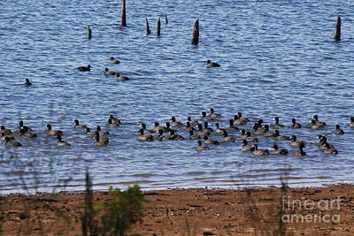 Photograph - Coots On The Water by Mark McReynolds