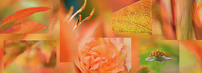 Copper Apricot Collage Art Print