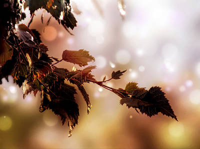 Art Print featuring the photograph Copper Birch by Valerie Anne Kelly
