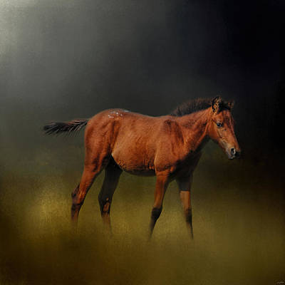 Copper Colt In The Moonlight Art Print