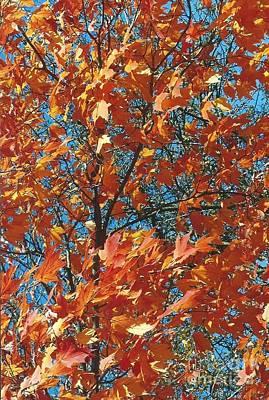 Copper Leaves On A Majestic Blue Sky Original by Jane Butera Borgardt