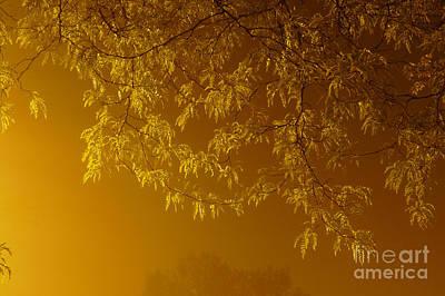 Photograph - Copper Leaves In Fog by Deborah Smolinske
