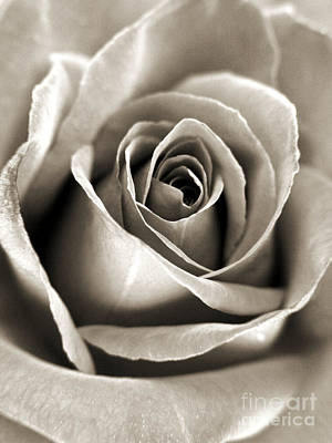 Photograph - Copper Rose by Jackie Farnsworth