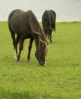 Photograph - Copper - Two Horses Grazing by Jane Eleanor Nicholas