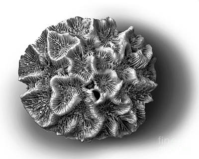 Photograph - Coral 2 by Walt Foegelle