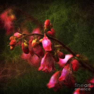 Photograph - Coral Bells Square by Lee Craig