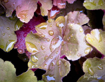 Photograph - Coral Bells With Raindrops by Nancy Olivia Hoffmann