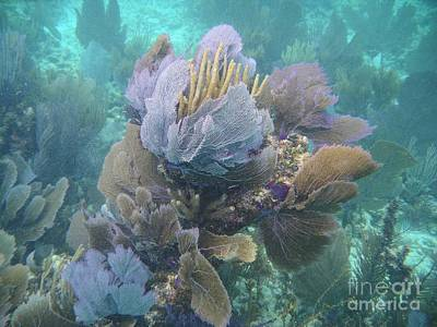 Photograph - Coral Cluster by Adam Jewell
