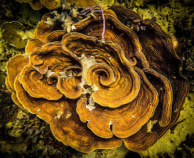Photograph - Coral Farming by Tyler Lucas