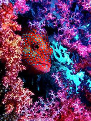 Coral Wall Art - Photograph - Coral Hind by Dani Barchana