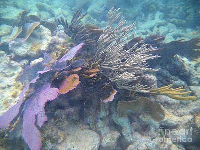 Pennekamp Photograph - Coral Mix by Adam Jewell