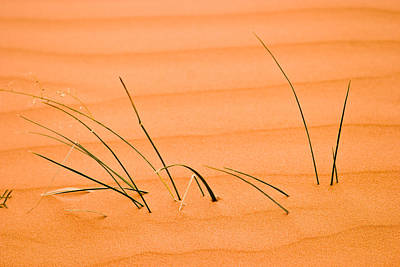 Fall Grass Photograph - Coral Pink Sands 1 by Adam Romanowicz